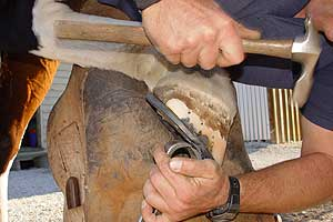Rodney King Farrier Qualified Master Farrier